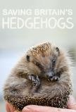 Saving Britain's Hedgehogs